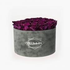 EXTRA LARGE BLUMMiN - hallist velvetist karp VINTAGE PLUM roosidega