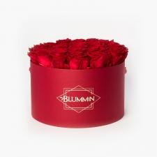 EXTRA LARGE BLUMMiN - punane karp VIBRANT RED roosidega