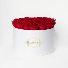 EXTRA LARGE BLUMMiN - valge karp VIBRANT RED roosidega