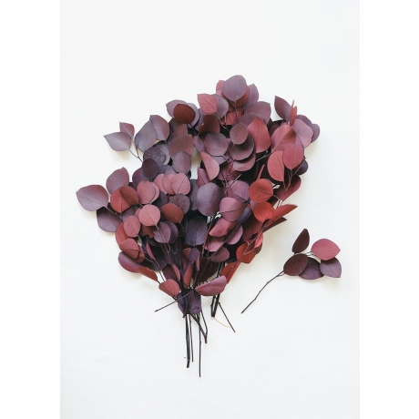 02909-RD-Red-Preserved-Eucalyptus_x1200.progressive.jpg