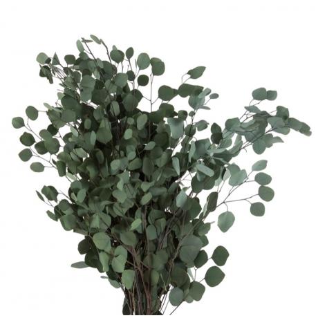 eukalüpt-populus.jpg