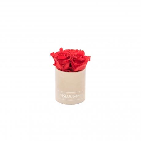 XS BLUMMiN - nude sametkarp VIBRANT RED uinuvate roosidega.jpg