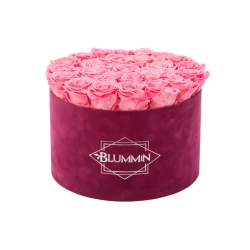 EXTRA LARGE BLUMMIN FUCHSIA VELVET BOX WITH BABY PINK ROSES