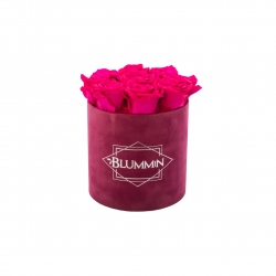 MEDIUM BLUMMiN - fuksia sametkarp HOT PINK uinuvate roosidega