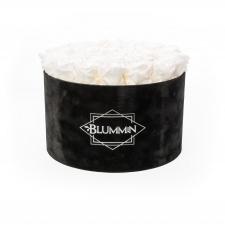 XL BLUMMiN - VELVET BLACK BOX WITH WHITE ROSES