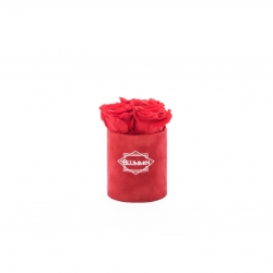 XS BLUMMIN - RED VELVET BOX WITH VIBRANT RED ROSES