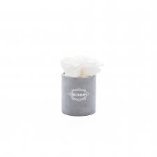 XS BLUMMiN - light grey velvet box with WHITE roses
