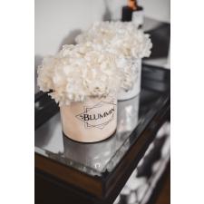 SMALL BLUMMiN -  sametkarp stabiliseeritud valge hortensiaga