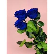 Спящие розы со стеблем - синие