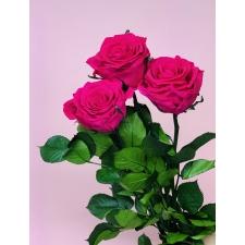 Спящие розы со стеблем - ярко-розовые