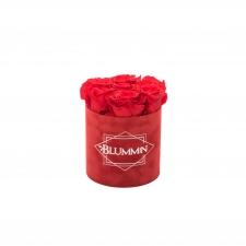 SMALL BLUMMiN - punane sametkarp VIBRANT RED uinuvate roosidega