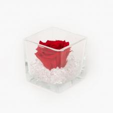 Klaasist vaas 8x8 cm VIBRANT RED magava roosiga ja kristallidega S