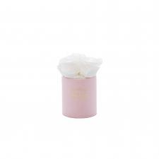 XS BLUMMiN - light pink box with WHITE roses