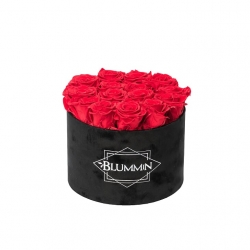 LARGE BLUMMIN - BLACK VELVET BOX WITH VIBRANT RED ROSES