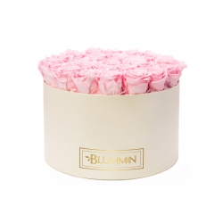 XL BLUMMiN - CREAM BOX WITH BRIDAL PINK ROSES