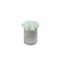 XS BLUMMIN - LIGHT GREY VELVET BOX WITH MINT ROSES