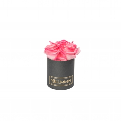 XS BLUMMiN - DARK GREY BOX WITH CANDY PINK ROSES
