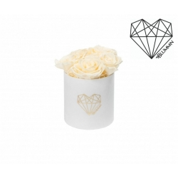 MIDI LOVE - WHITE VELVET BOX WITH CHAMPAGNE ROSES
