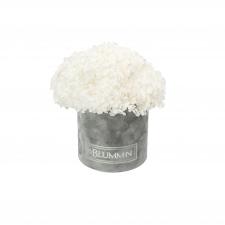 SMALL BLUMMiN -  helehall sametkarp stabiliseeritud valge hortensiaga