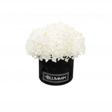 SMALL BLUMMiN -  must sametkarp stabiliseeritud valge hortensiaga