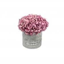 SMALL BLUMMiN -  helehall sametkarp stabiliseeritud sirelililla hortensiaga