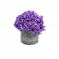SMALL BLUMMiN -  helehall sametkarp stabiliseeritud lilla hortensiaga