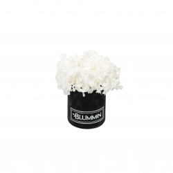 XS BLUMMiN - BLACK VELVET BOX WITH WHITE HORTENSIA