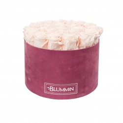 XL BLUMMiN - LIGHT PURPLE VELVET BOX WITH ICE PINK ROSES