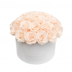 BOUQUET WITH 25 ROSES - LARGE WHITE VELVET BOX WITH ICE PINK ROSES