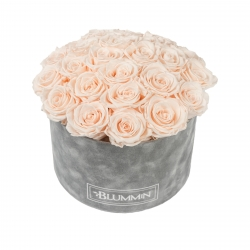 BOUQUET WITH 25 ROSES - LARGE BLUMMIN LIGHT GREY VELVET BOX WITH ICE PINK ROSES