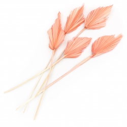KUIVATATUD LILLED - PALM SPEAR PALE PINK 50 CM