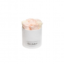 -20% SMALL BLUMMiN VALGE SAMETKARP MIX (ICE PINK, PEACHY PINK, CHAMPAGNE) ROOSIDEGA