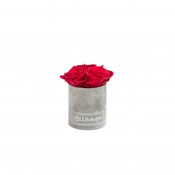 XS BLUMMiN - light grey velvet box with ROSEBERRY roses