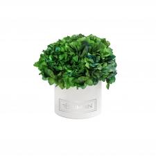 SMALL BLUMMiN - valge sametkarp kauasäiliva rohelise hortensiaga