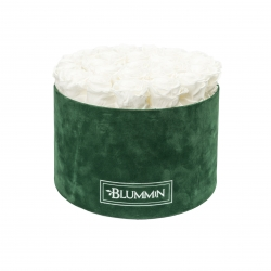 XL BLUMMiN - GREEN VELVET BOX WITH WHITE ROSES