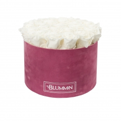 XL BLUMMiN - LIGHT PURPLE VELVET BOX WITH WHITE ROSES
