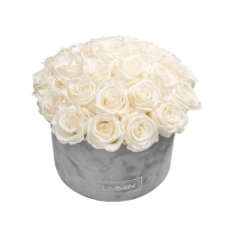 BOUQUET WITH 25 ROSES - LARGE LIGHT GREY VELVET BOX WITH WHITE ROSES