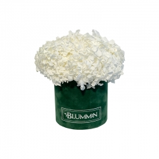 SMALL BLUMMiN -  roheline sametkarp stabiliseeritud valge hortensiaga