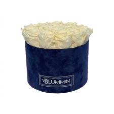 LARGE DARK BLUE VELVET BOX WITH CHAMPAGNE ROSES