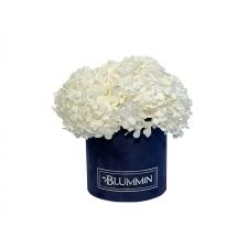 SMALL BLUMMiN -  tumesinine sametkarp stabiliseeritud valge hortensiaga