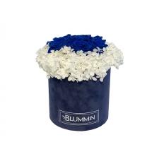 MEDIUM BLUMMiN - dark blue velvet box with white stabilized hydrangea and 7 Ocean blue roses