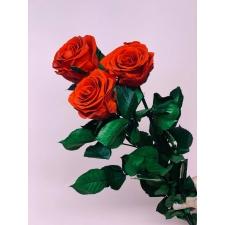 Спящие розы со стеблем - красные