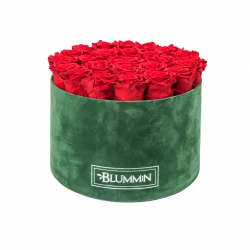 XL BLUMMiN - GREEN VELVET BOX WITH VIBRANT RED ROSES
