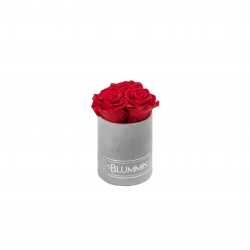 XS BLUMMIN - LIGHT GREY VELVET BOX WITH VIBRANT RED ROSES