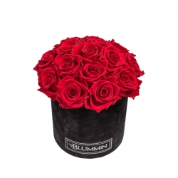 BOUQUET WITH 15 ROSES - MEDIUM BLACK VELVET BOX WITH VIBRANT RED ROSES