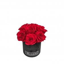 BOUQUET  WITH 7 ROSES - MIDI BLUMMIN BLACK VELVET BOX WITH VIBRANT RED ROSES