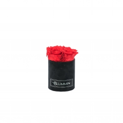 XS BLUMMIN - BLACK VELVET BOX WITH VIBRANT RED ROSES