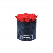 MEDIUM BLUMMIN - DARK BLUE VELVET BOX WITH VIBRANT RED ROSES