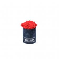 XS BLUMMIN DARK BLUE VELVET BOX WITH VIBRANT RED ROSES