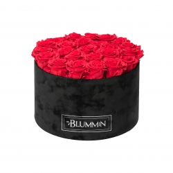 EXTRA LARGE BLUMMIN - BLACK VELVET BOX WITH VIBRANT RED ROSES
